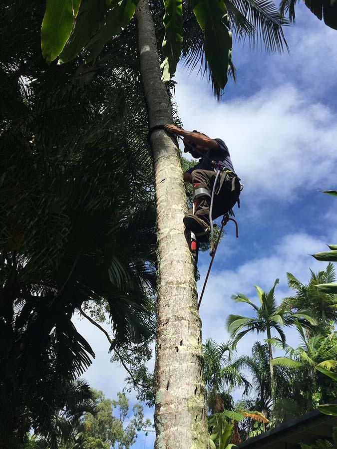 Cairns Tree Mulching